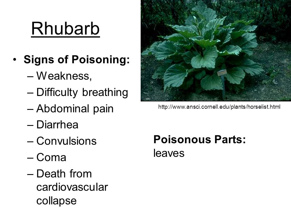 Rhubarb Signs of Poisoning: Weakness, Difficulty breathing