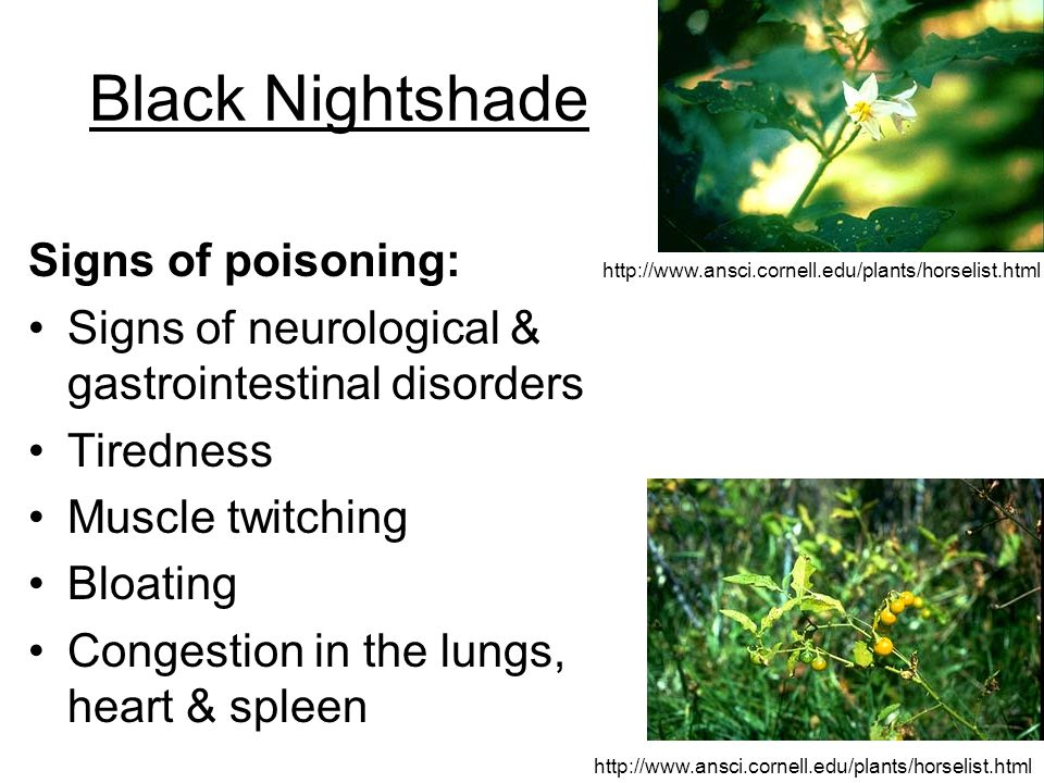 Black Nightshade Signs of poisoning: