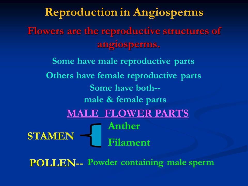 Reproduction in Angiosperms