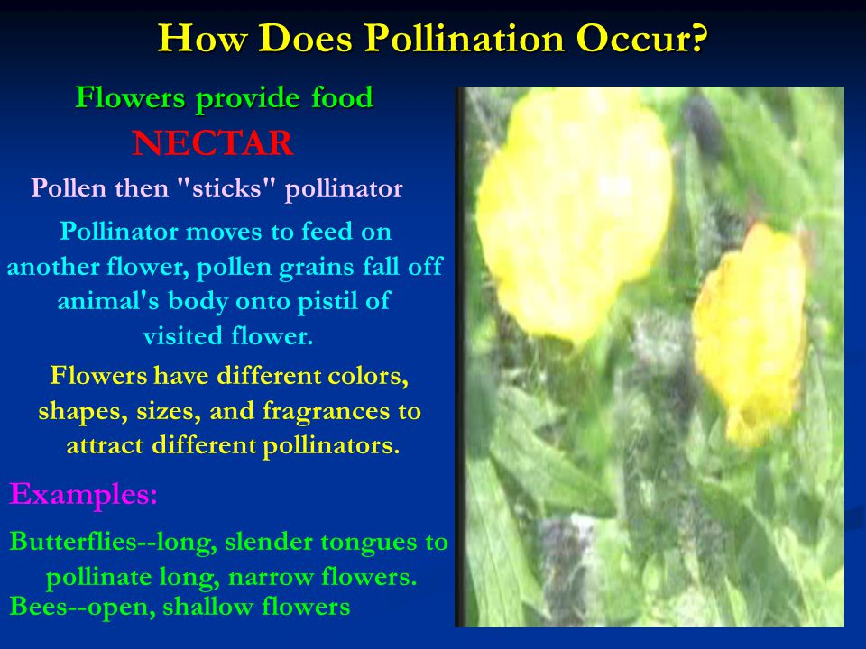 How Does Pollination Occur
