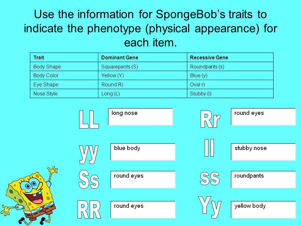 Use the information for SpongeBob's traits to indicate the phenotype (physical appearance) for each item.