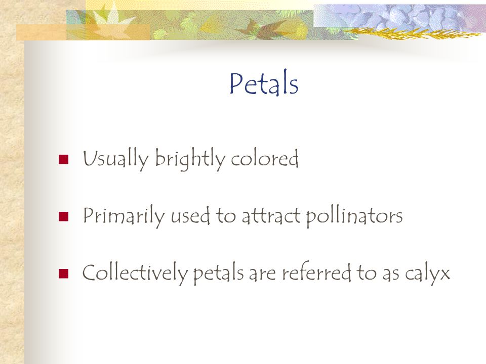 Petals Usually brightly colored Primarily used to attract pollinators