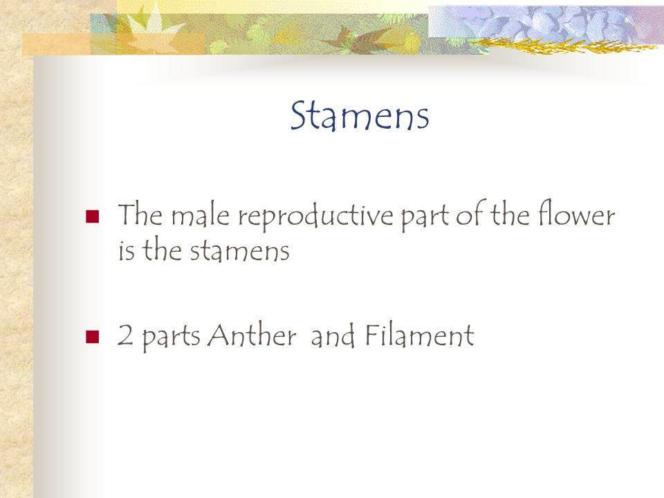 Stamens The male reproductive part of the flower is the stamens