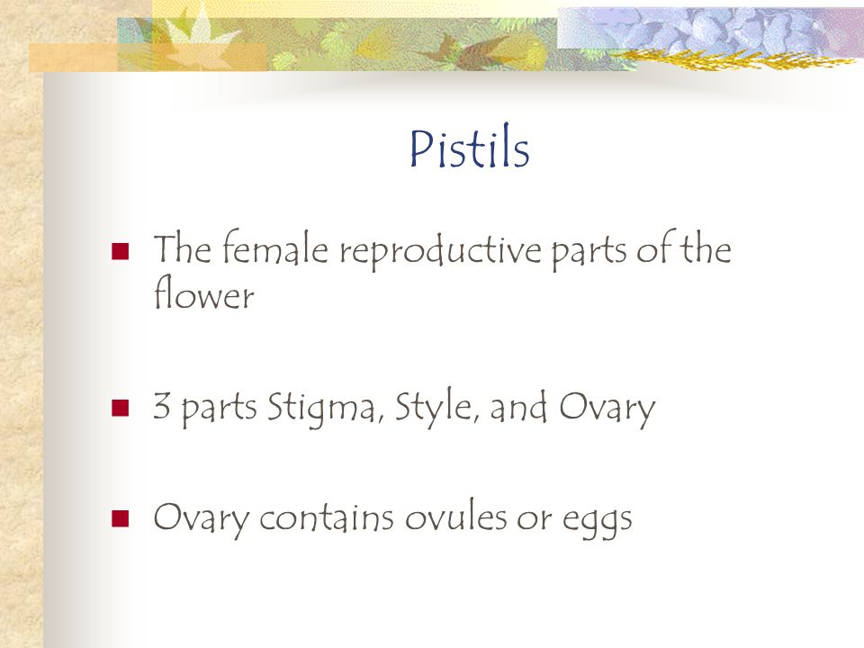 Pistils The female reproductive parts of the flower