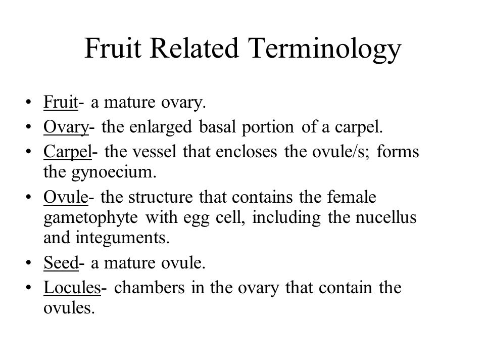 Fruit Related Terminology
