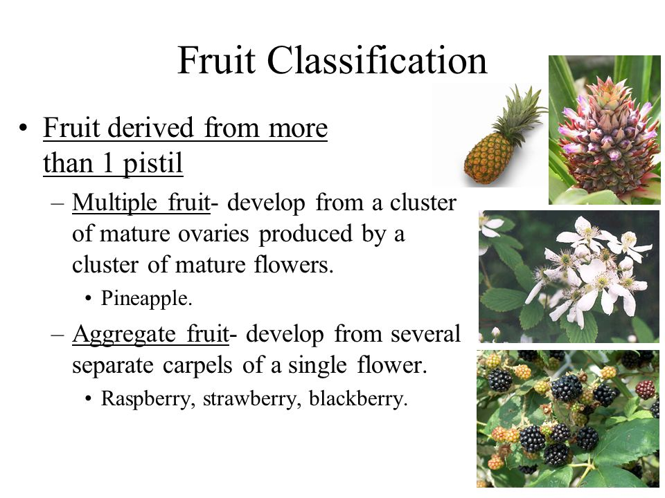 Fruit Classification Fruit derived from more than 1 pistil