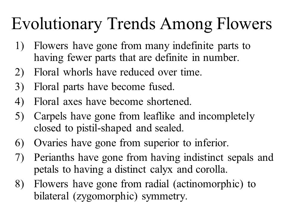 Evolutionary Trends Among Flowers