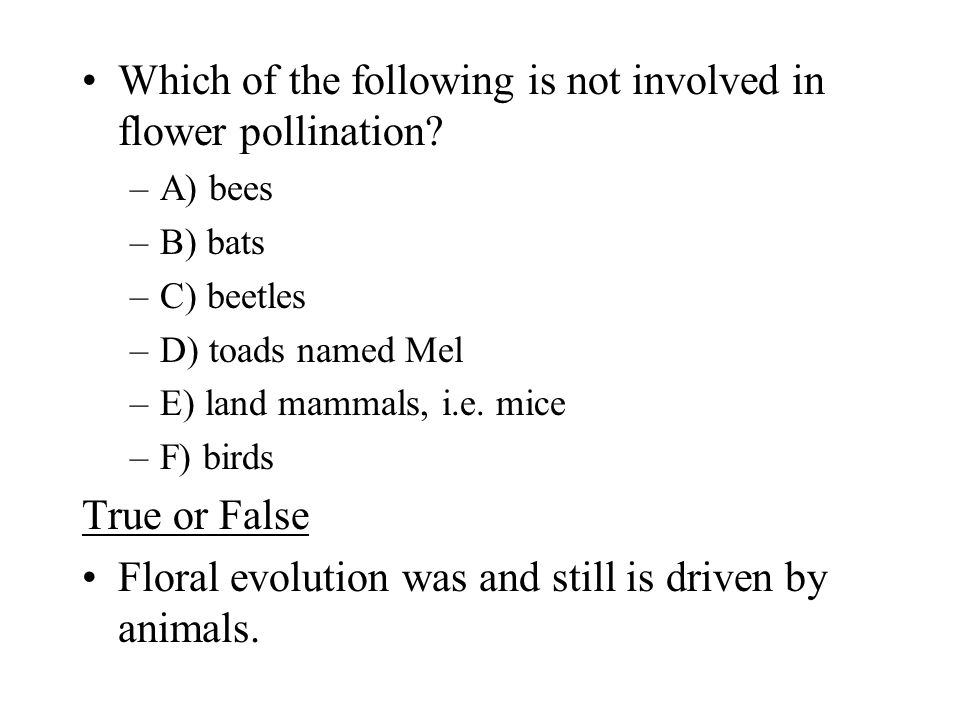 Which of the following is not involved in flower pollination