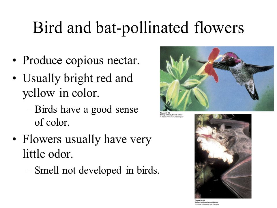 Bird and bat-pollinated flowers