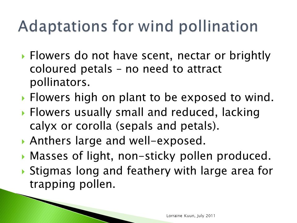 Adaptations for wind pollination