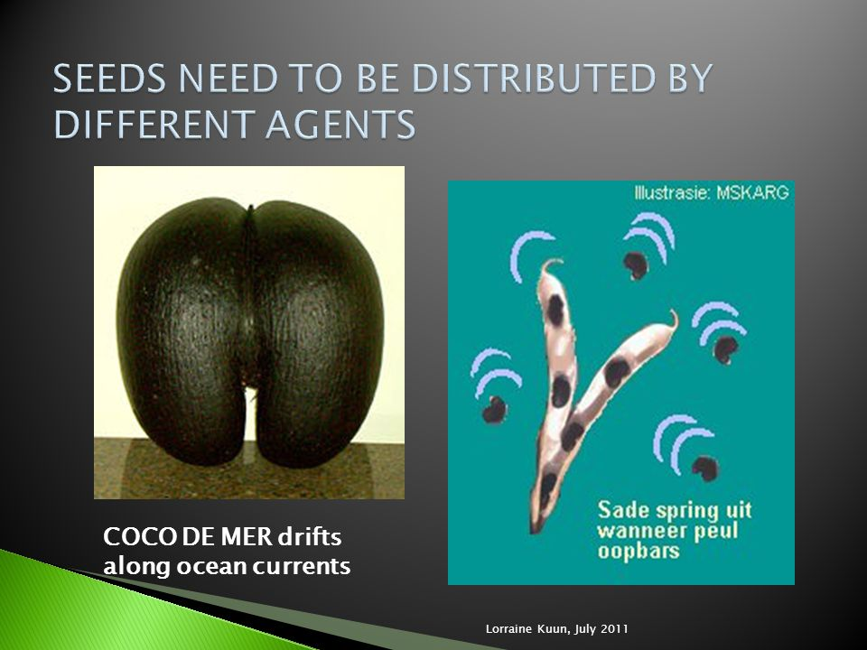 SEEDS NEED TO BE DISTRIBUTED BY DIFFERENT AGENTS
