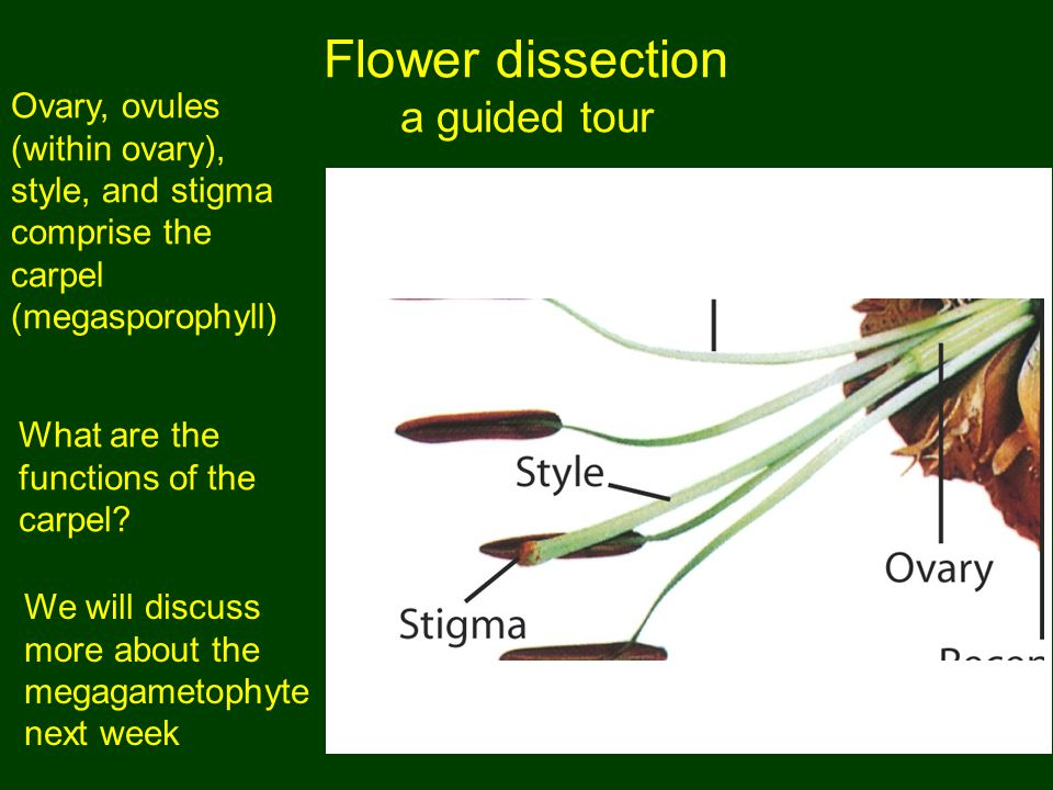 Flower dissection a guided tour