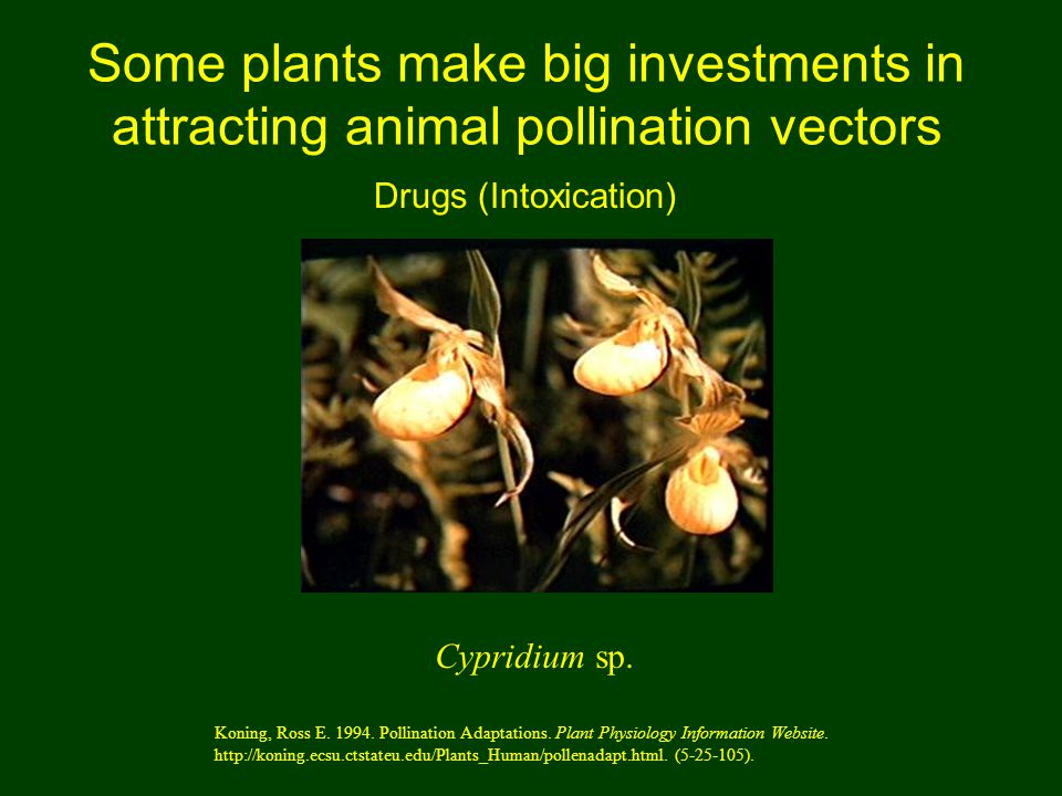 Some plants make big investments in attracting animal pollination vectors