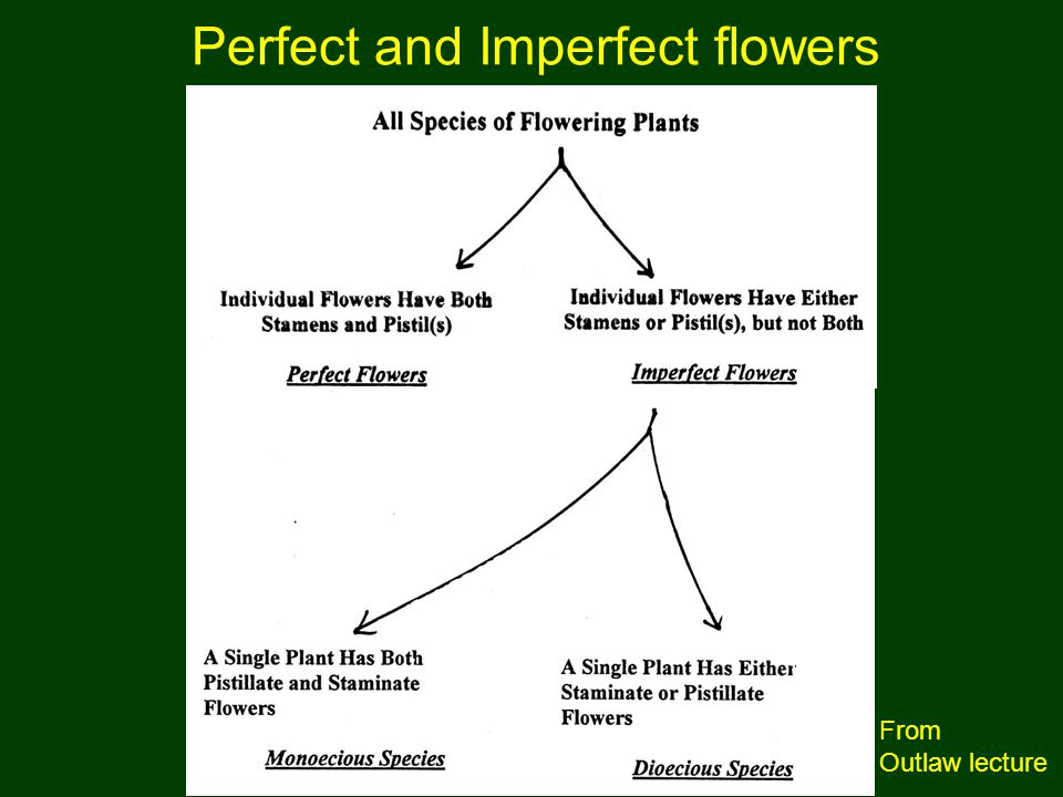 Perfect and Imperfect flowers
