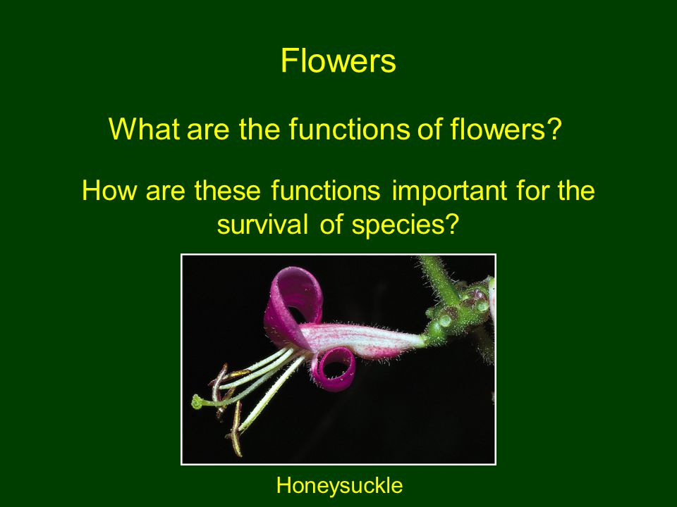 How are these functions important for the survival of species
