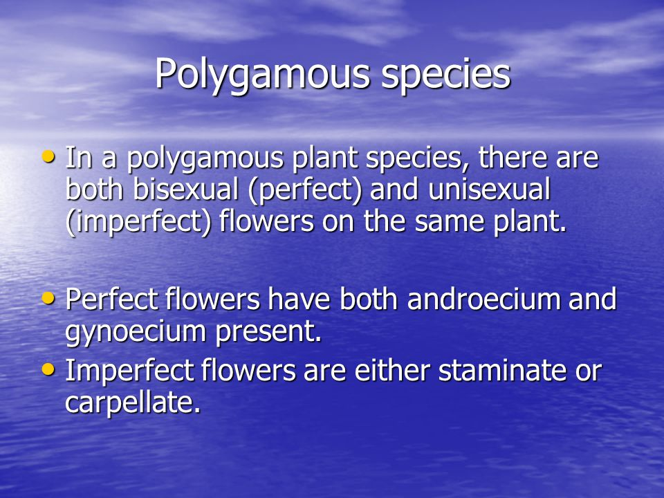 Polygamous species In a polygamous plant species, there are both bisexual (perfect) and unisexual (imperfect) flowers on the same plant.