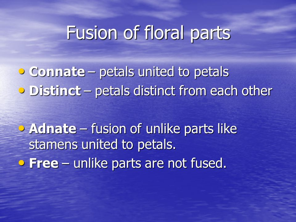 Fusion of floral parts Connate – petals united to petals