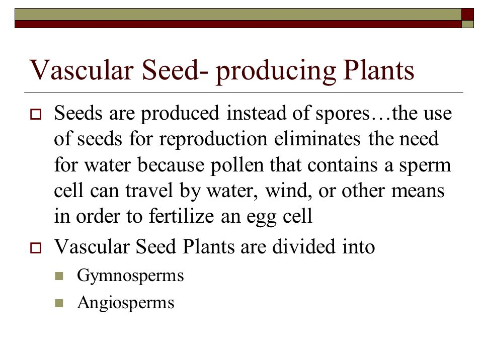 Vascular Seed- producing Plants