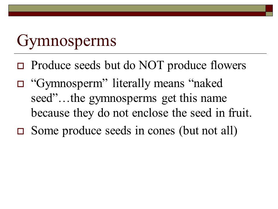 Gymnosperms Produce seeds but do NOT produce flowers