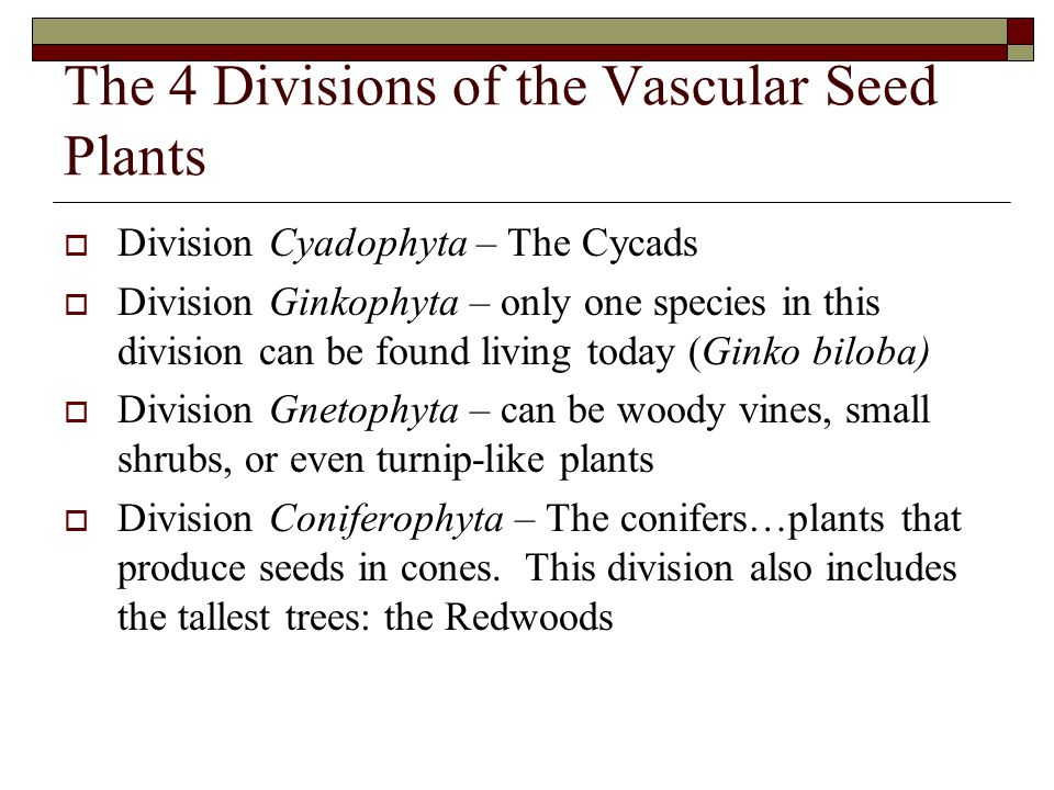 The 4 Divisions of the Vascular Seed Plants
