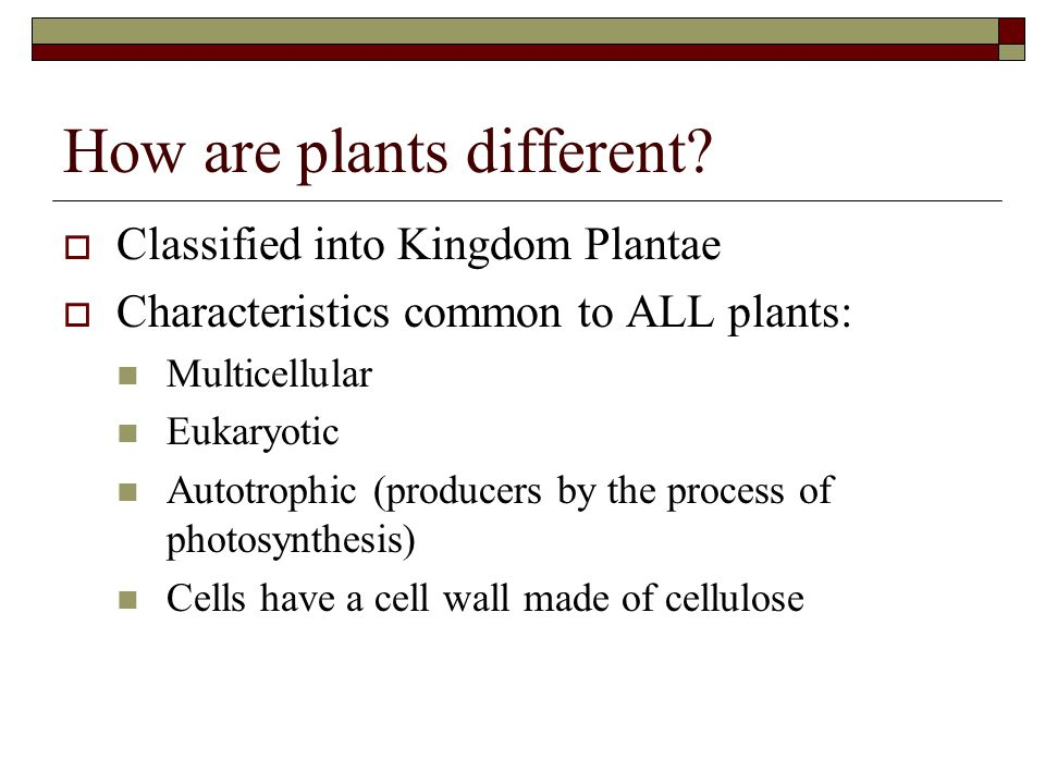 How are plants different