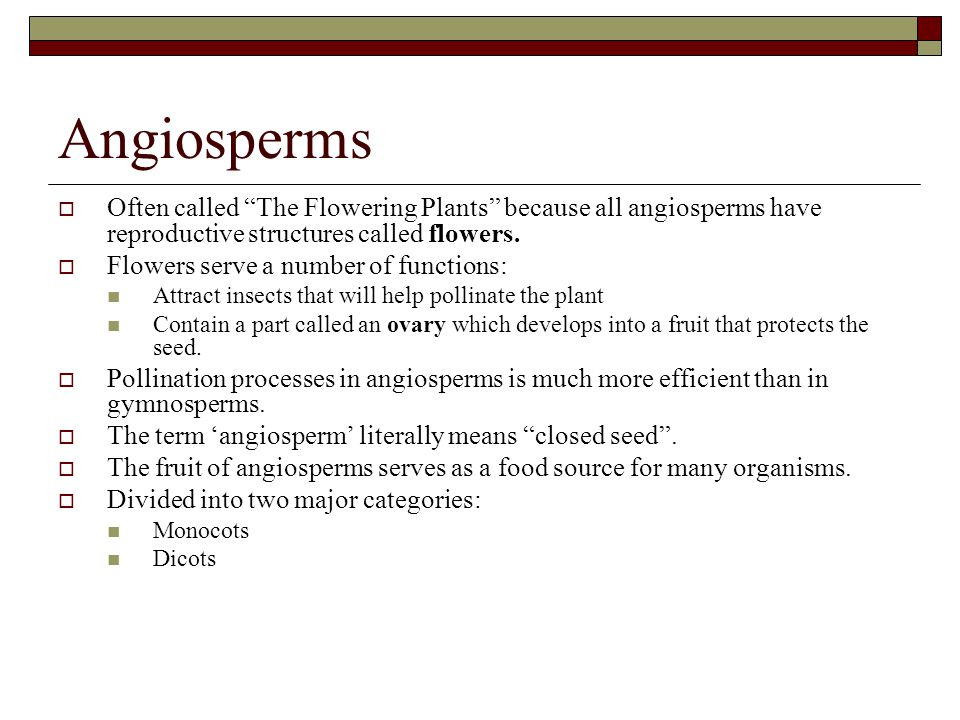 Angiosperms Often called The Flowering Plants because all angiosperms have reproductive structures called flowers.
