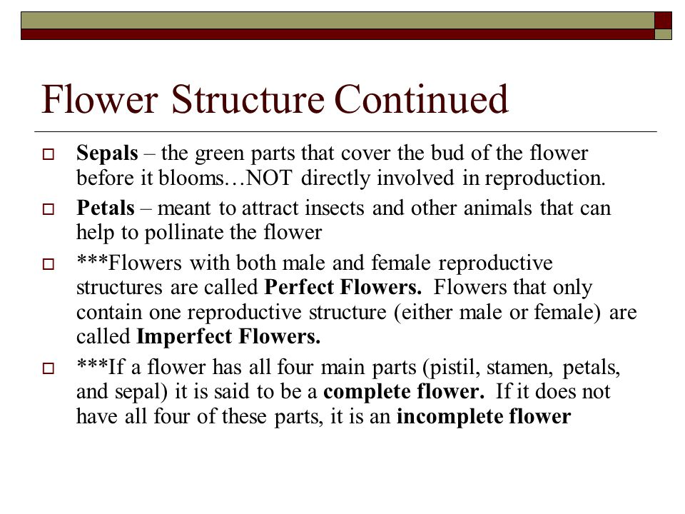 Flower Structure Continued