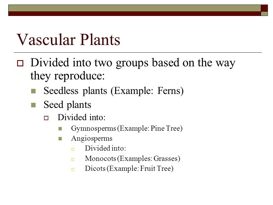 Vascular Plants Divided into two groups based on the way they reproduce: Seedless plants (Example: Ferns)