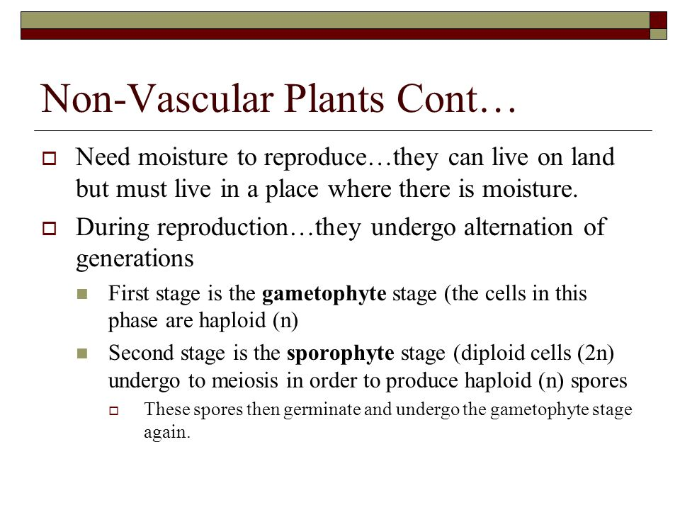 Non-Vascular Plants Cont…