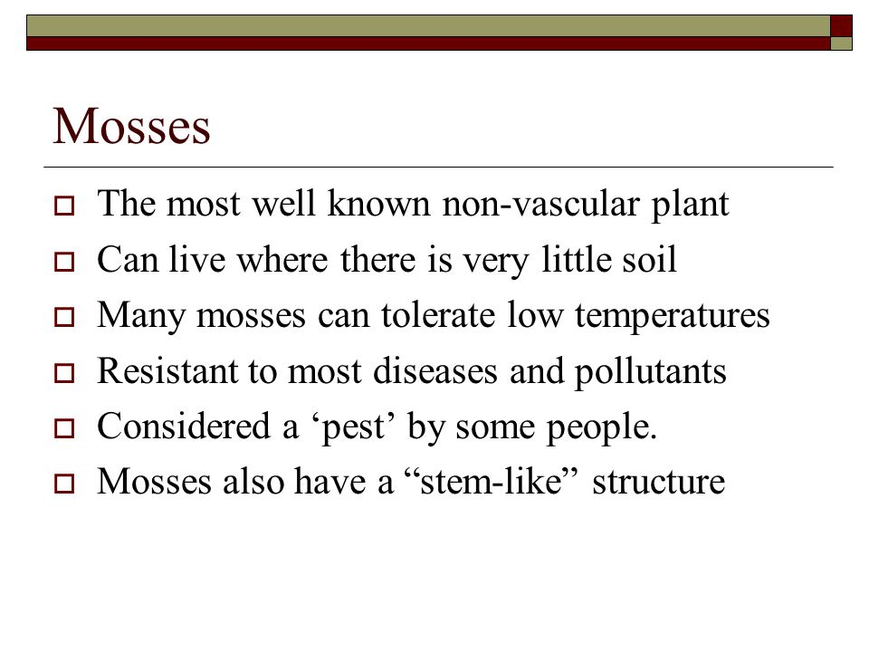 Mosses The most well known non-vascular plant