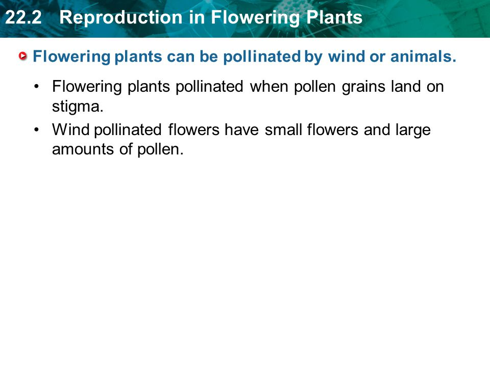 Flowering plants can be pollinated by wind or animals.