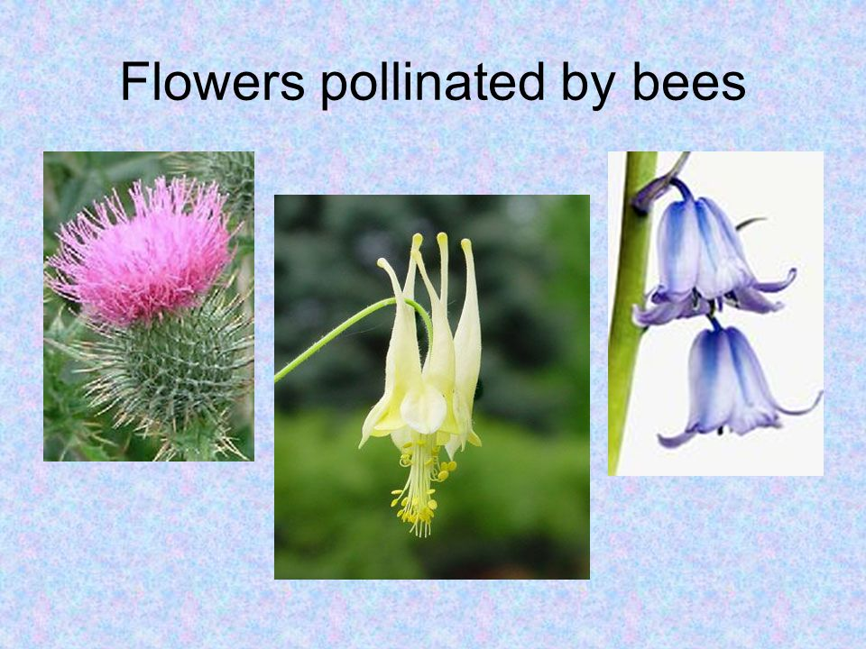 Flowers pollinated by bees