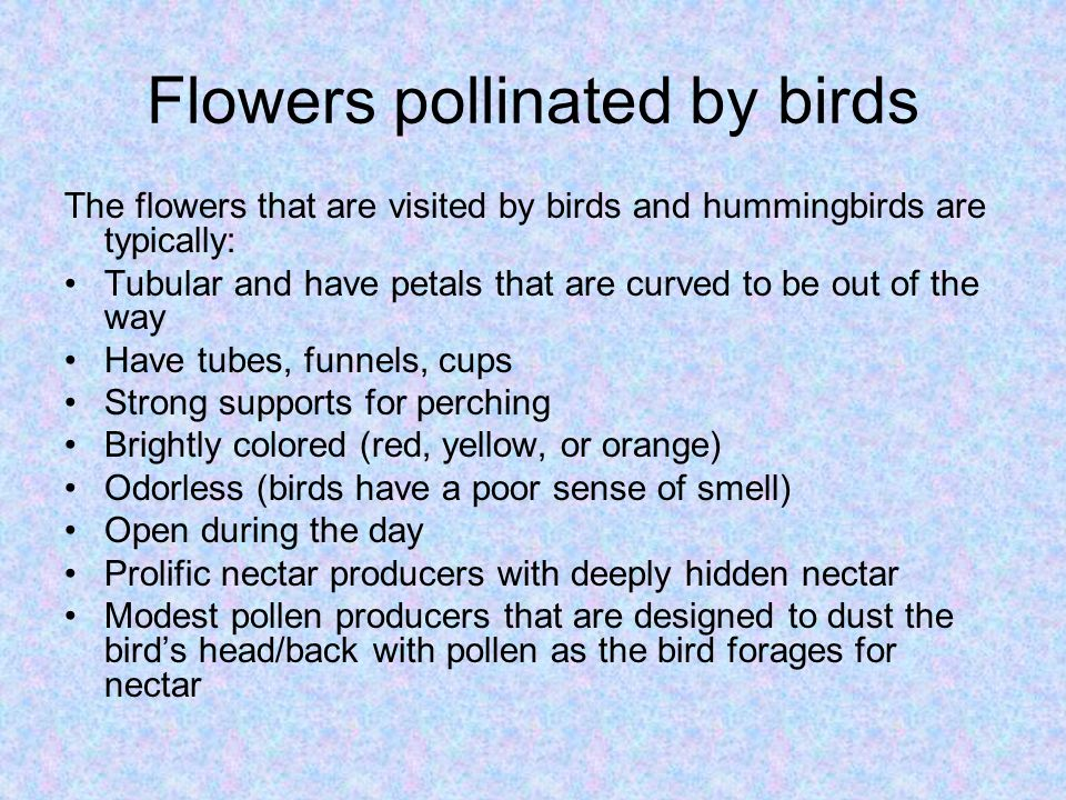 Flowers pollinated by birds
