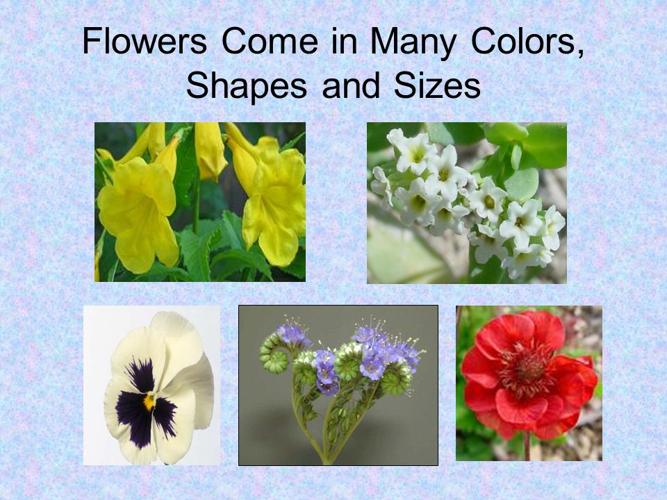 Flowers Come in Many Colors, Shapes and Sizes