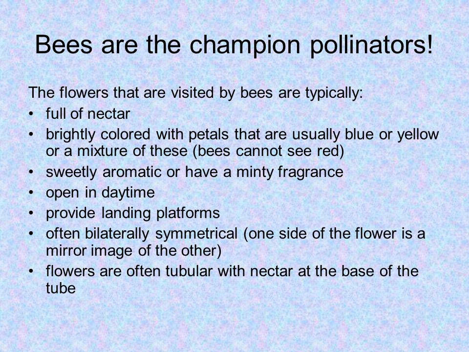 Bees are the champion pollinators!