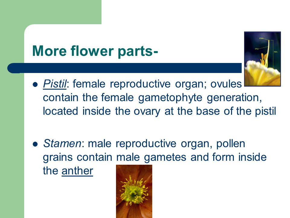 More flower parts-