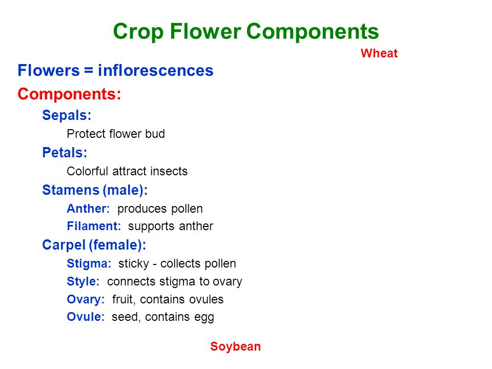 Crop Flower Components