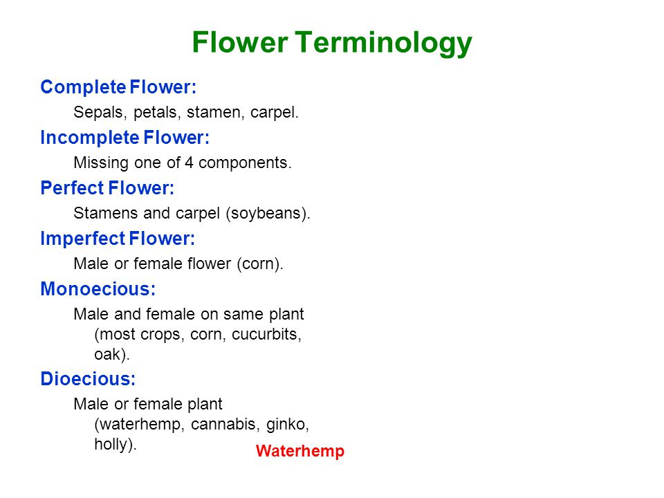Flower Terminology Complete Flower: Incomplete Flower: Perfect Flower: