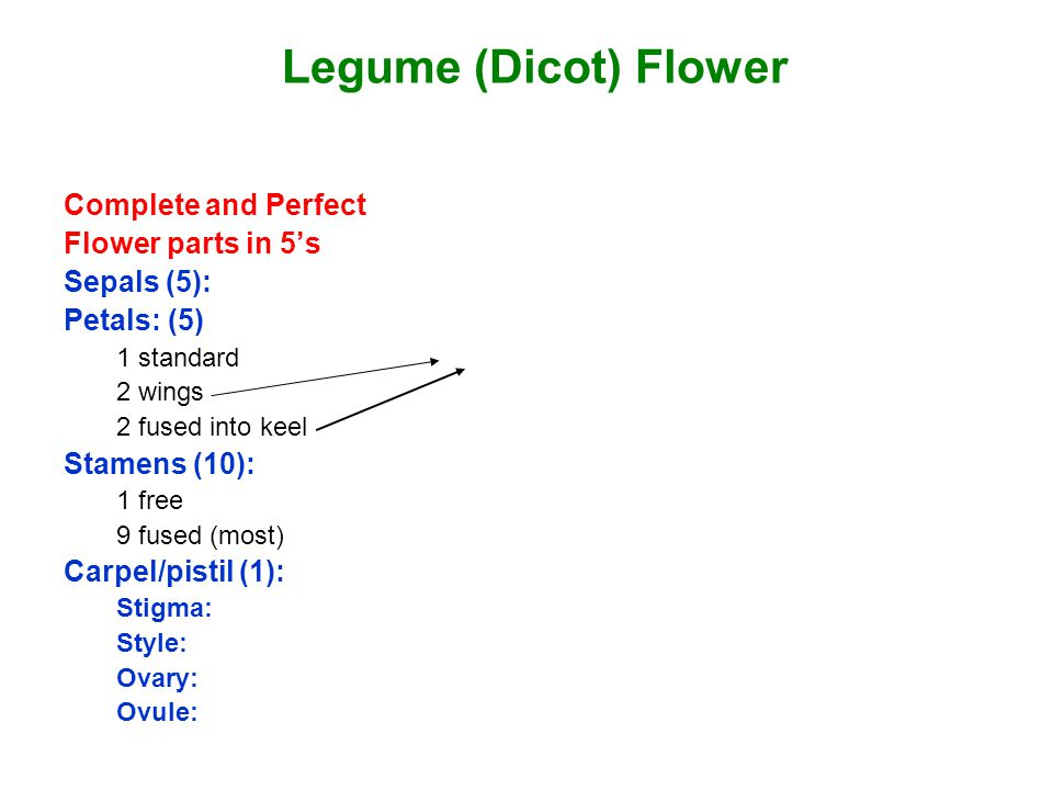 Legume (Dicot) Flower Complete and Perfect Flower parts in 5's