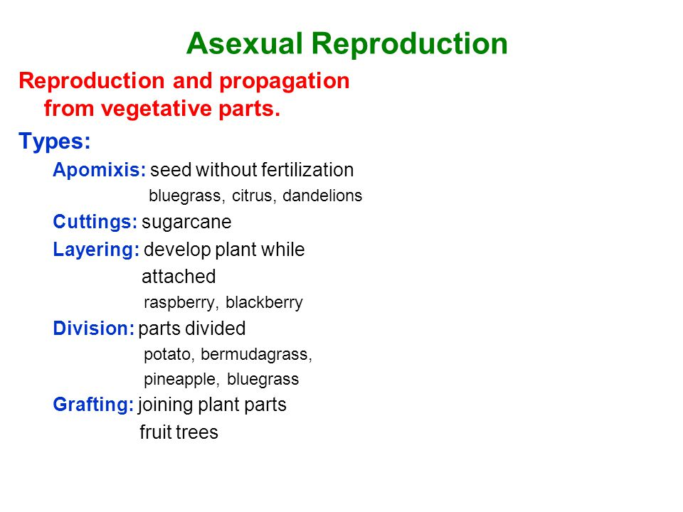 Asexual Reproduction Reproduction and propagation from vegetative parts. Types: Apomixis: seed without fertilization.