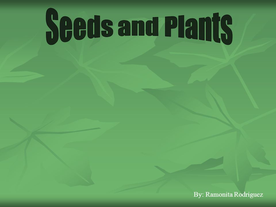 Seeds and Plants By: Ramonita Rodriguez