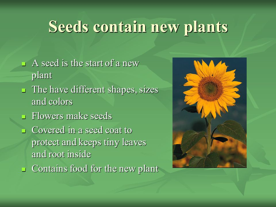 Seeds contain new plants