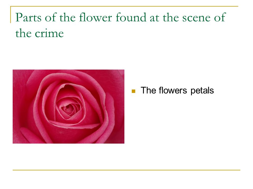 Parts of the flower found at the scene of the crime