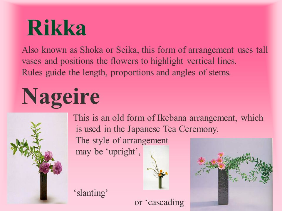 Rikka Also known as Shoka or Seika, this form of arrangement uses tall. vases and positions the flowers to highlight vertical lines.
