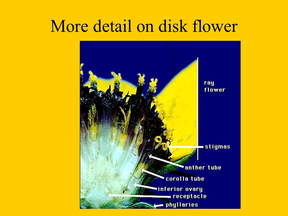 More detail on disk flower