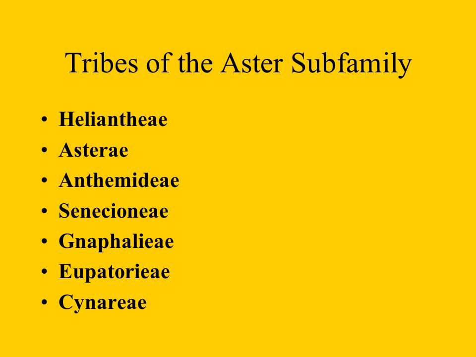 Tribes of the Aster Subfamily
