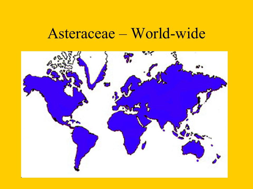 Asteraceae – World-wide