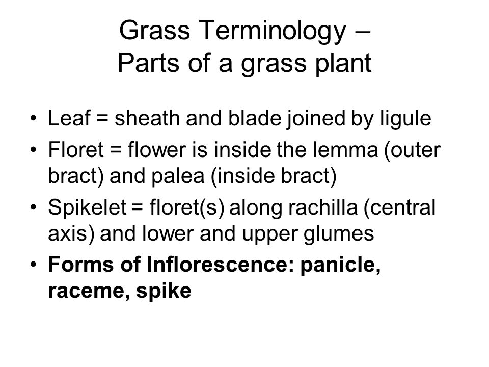 Grass Terminology – Parts of a grass plant