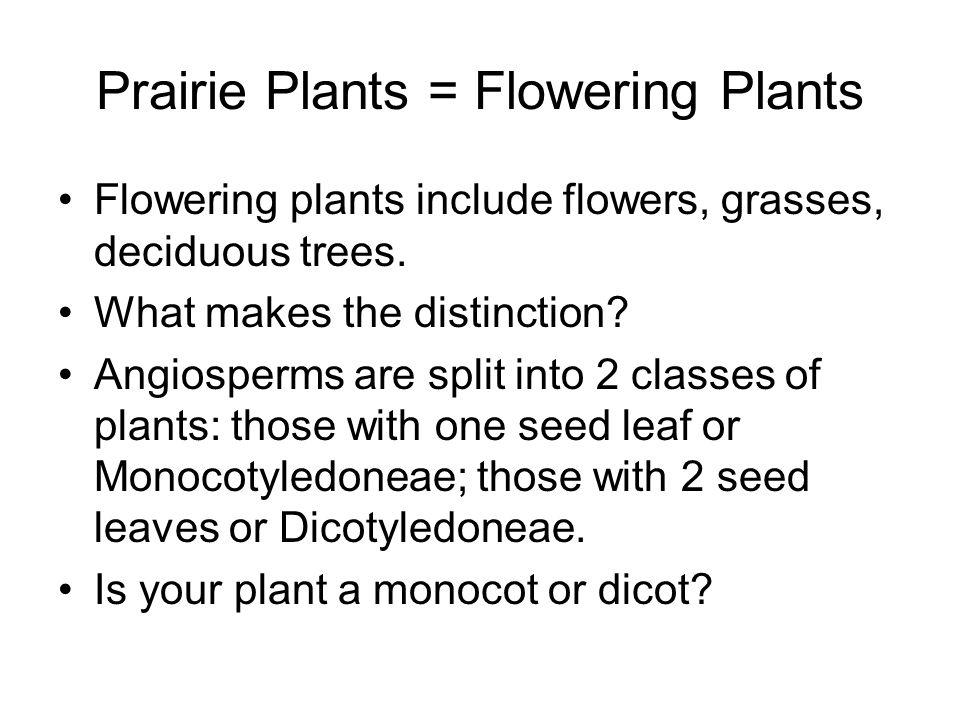Prairie Plants = Flowering Plants