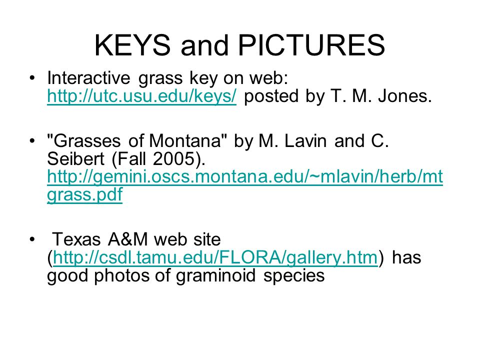 KEYS and PICTURES Interactive grass key on web: http://utc.usu.edu/keys/ posted by T. M. Jones.